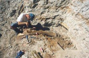 DINOSAUR 13: A Palaeontologist's View