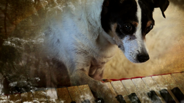 heart+of+a+dog+dogwoof+documentary+laurie+anderson
