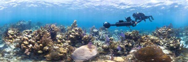 coral-blog